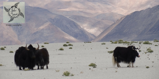 cold_desert_Nubra_valley